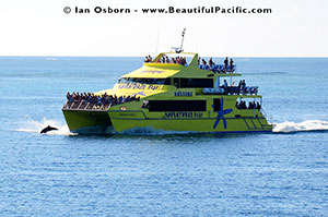 the yasawa flyer traveliing in the yasawa islands